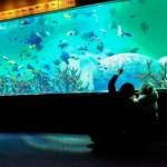 東京遊歩:葛西臨海水族館