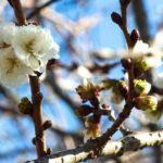 大人の英語学習:新聞コラムの翻訳 2017.2.
