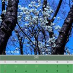 Mac App 『Swift Publisher 5』で作る3月のカレンダー:北の丸公園の木蓮