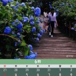 6月のカレンダー:北鎌倉 明月院