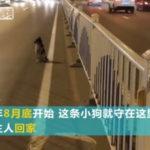 中国語の勉強:微博の「亡くなった主人を待ち続ける犬」