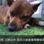 中国語の勉強:微博の「心痛む犬の記事」