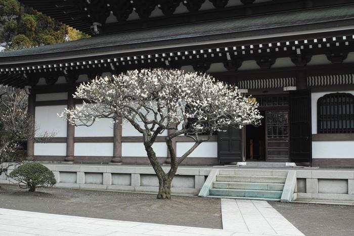 北鎌倉遊歩:円覚寺