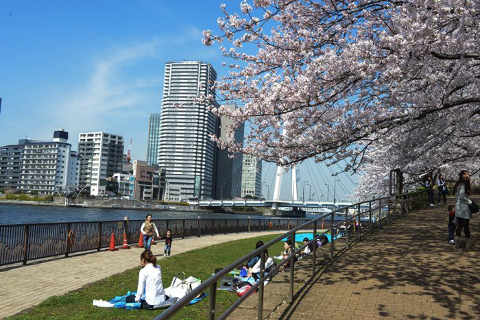 東京遊歩:桜の隅田川沿い