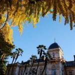東京遊歩:『旧岩崎邸庭園』の青空に映える黄葉