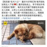 微博を読んで:秋田犬と忠犬ハチ公の話