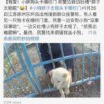 中国語の勉強:微博の『子犬の首が門柵に挟まる..警察官がしたことは』